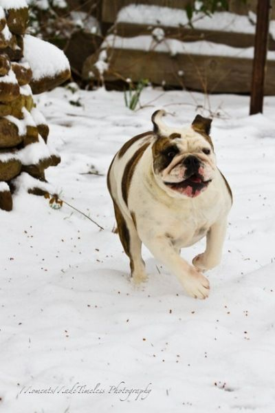 Yard dogg in the snow by Dan Hugen