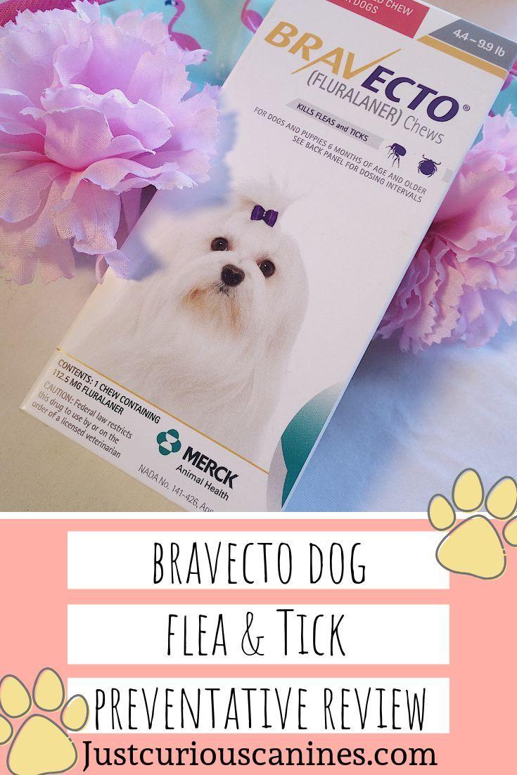 Bravecto Dog Flea And Tick Preventative Review Flea and