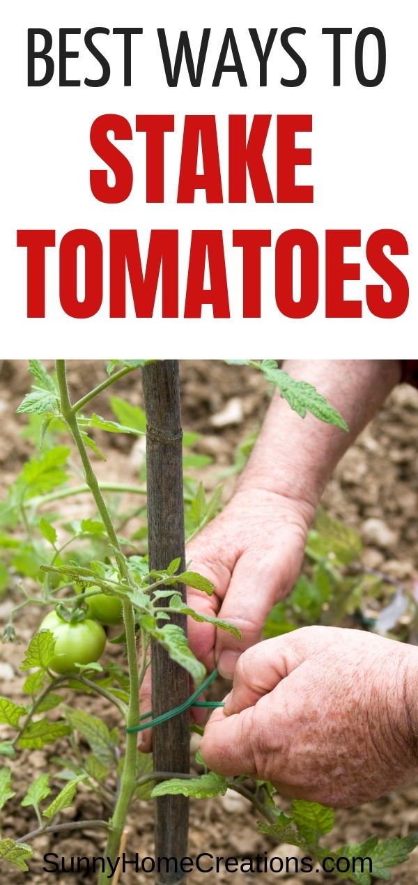 Awesome ideas for staking tomatoes When growing tomato plants you want to make sure to support them The tomato fruits can be heavy Here are some simple ways to tie cherry...