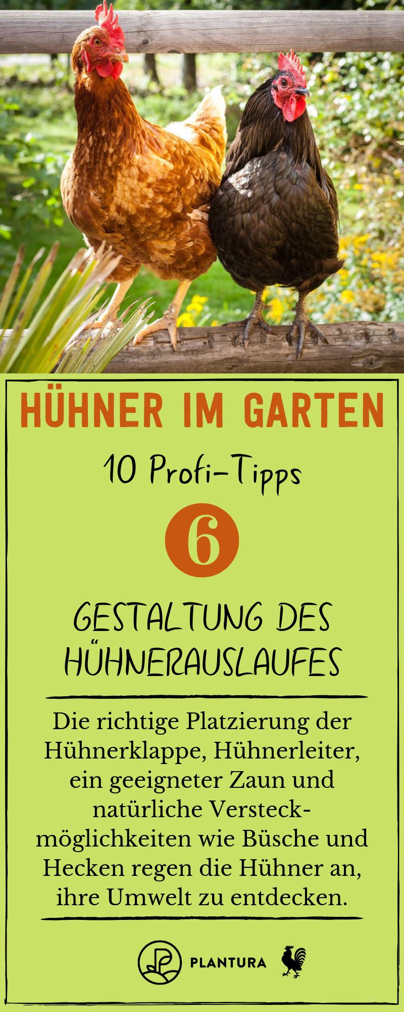 Huhner Im Garten 10 Profi Tipps Zur Richtigen Haltung Plantura Gardening For Kids Chicken Garden Sustainable Garden