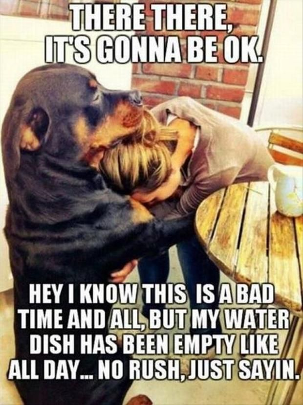277c6567821f04e54abe7c4be9b67d07 i love dogs i'm pretty sure he didn't say that about his water