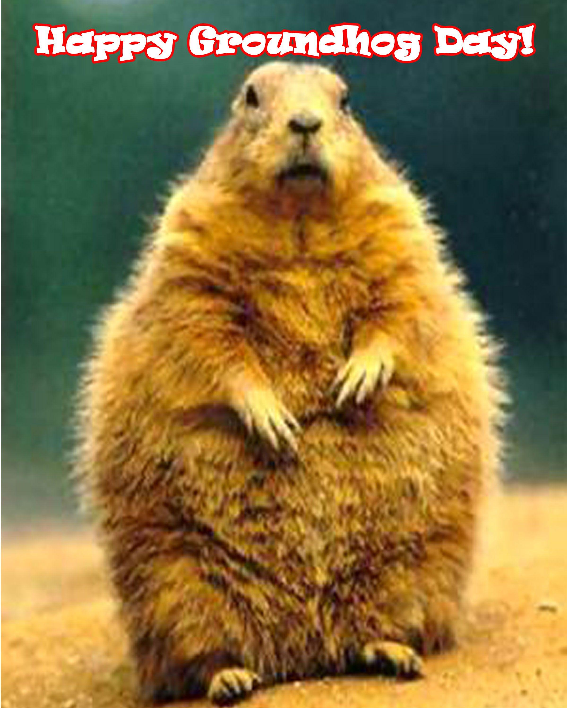happy groundhog day ground hog