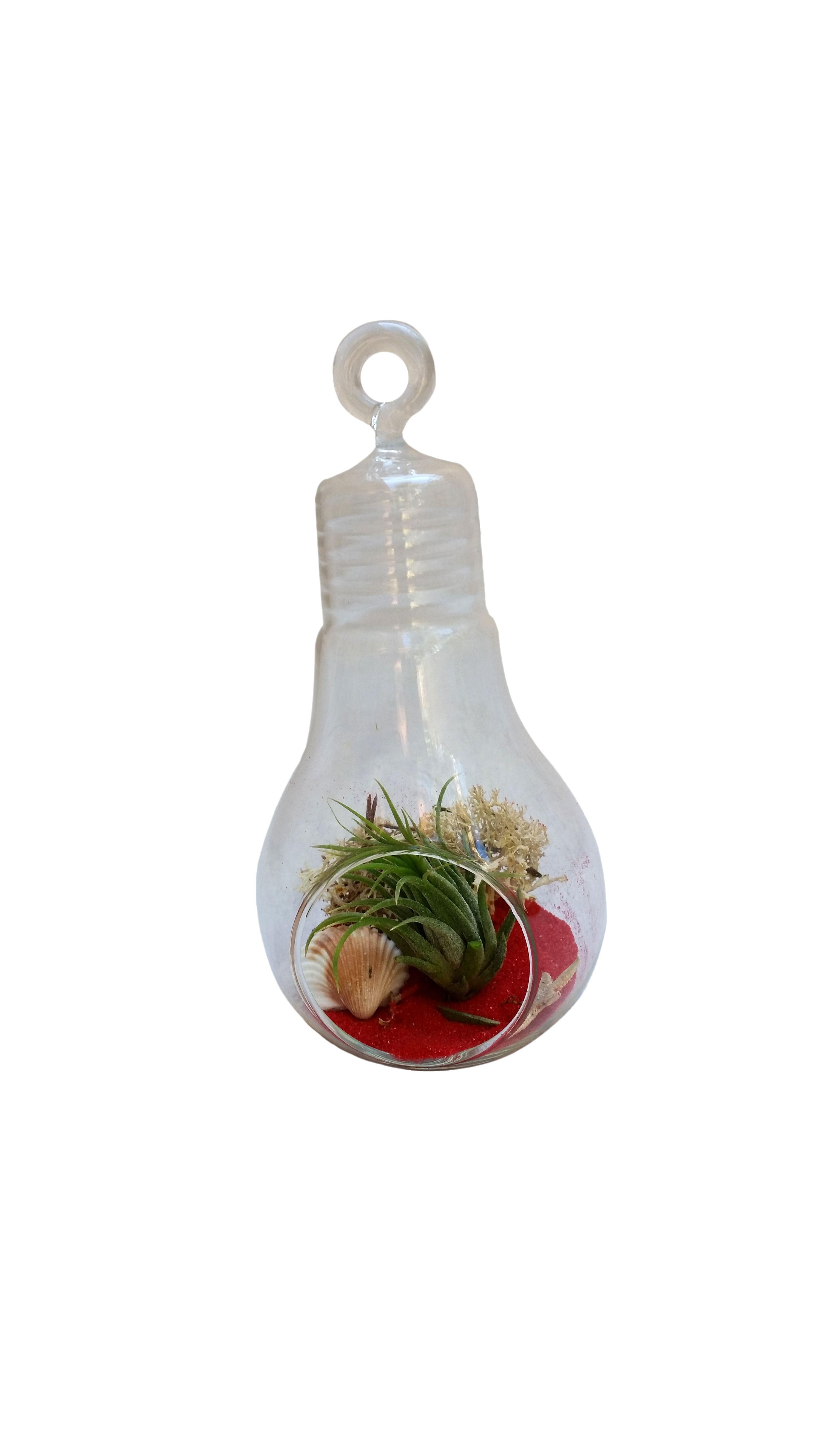 Air plants, Red light bulbs, Air