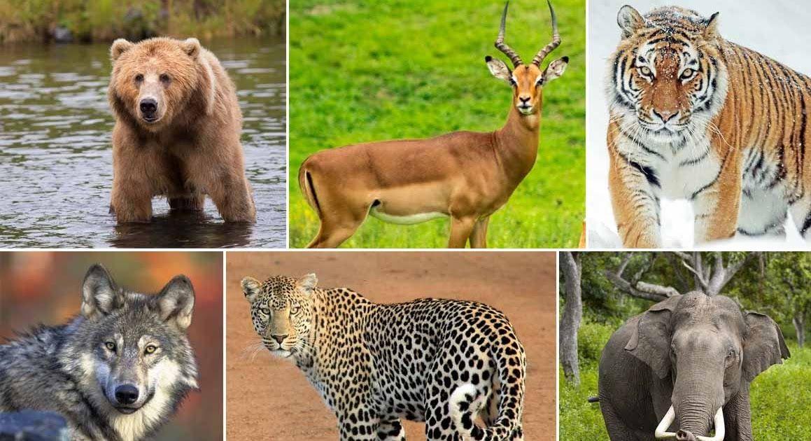 Animals And Their Diets di 2020 (Dengan gambar) Halaman