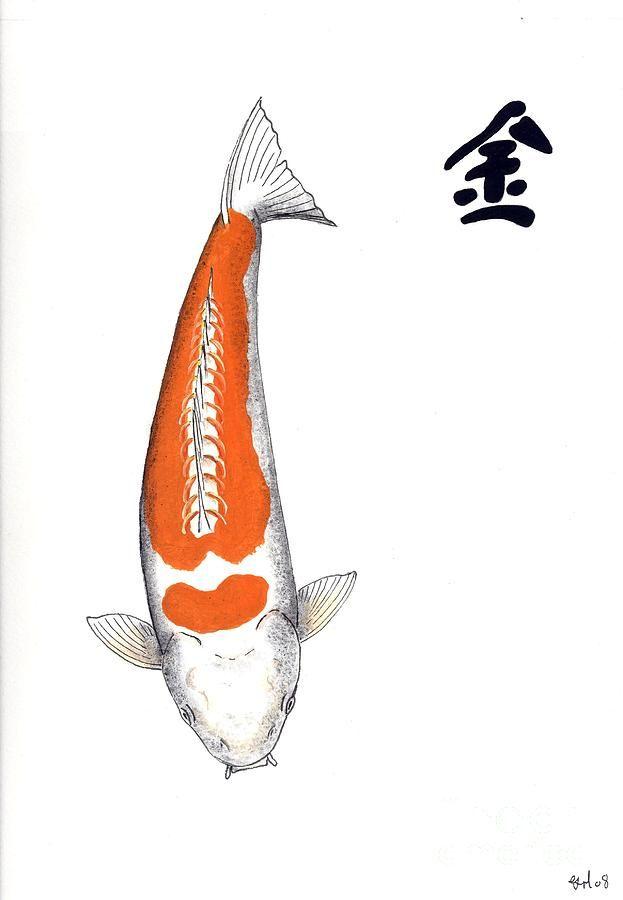 Single Orange And White Koi Koi Fish Koi Koi Fish Pond
