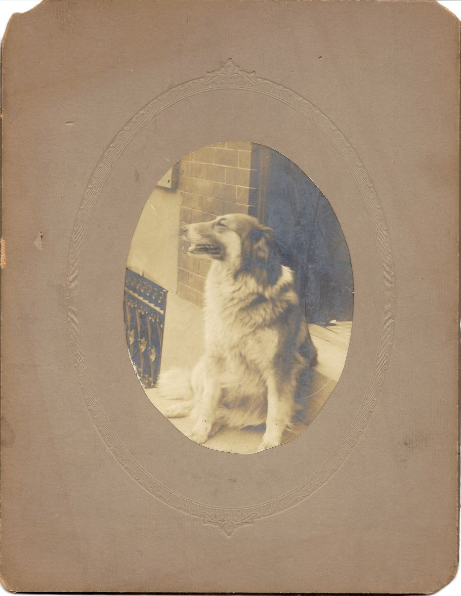 Cabinet Card c. 1900 of a Collie