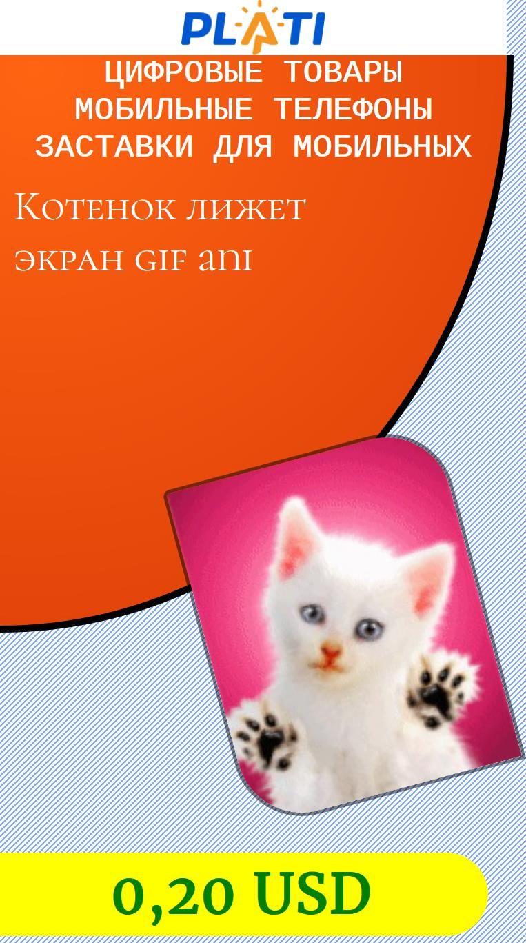 Видео заставка котенок лижет экран для телефона