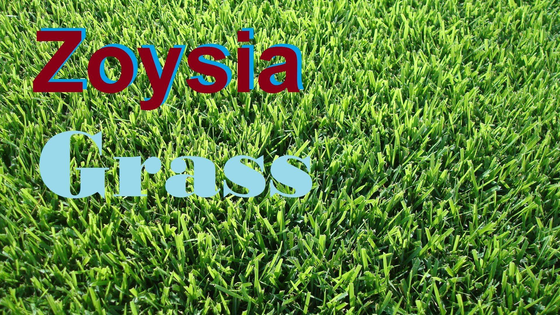 [What Grass Is That] [Zoysia Grass] [Empire Zoysia] [Zeon