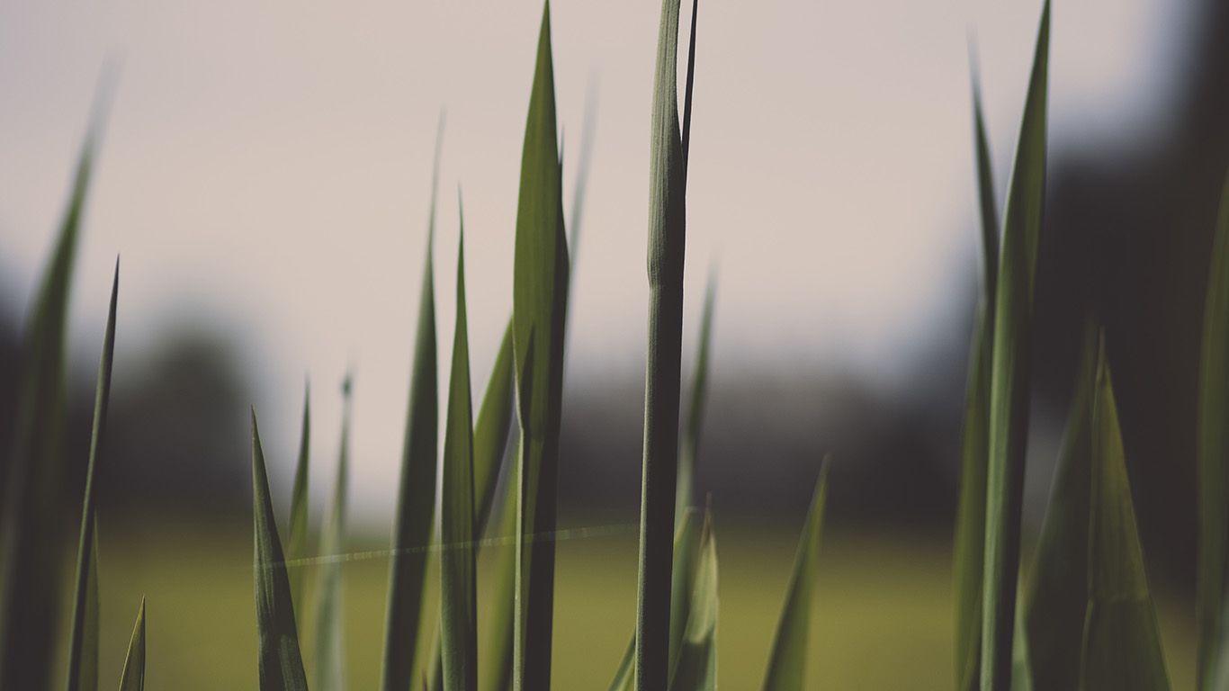 PAPERS.co | desktop wallpaper | nn91-lawn-flower-green-bokeh-nature