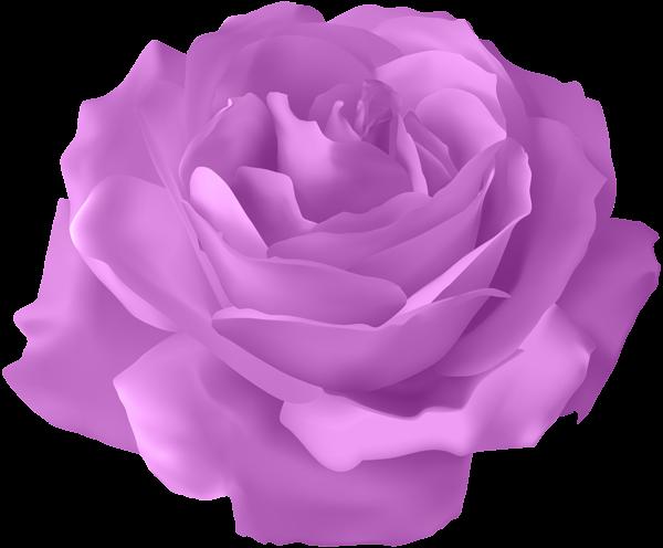 Purple Rose Transparent PNG Clip Art Image