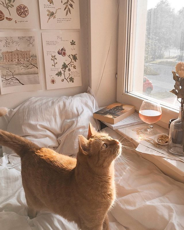 Pin By A Lin On Animals In 2020 Cat Aesthetic Cute Animals Cats