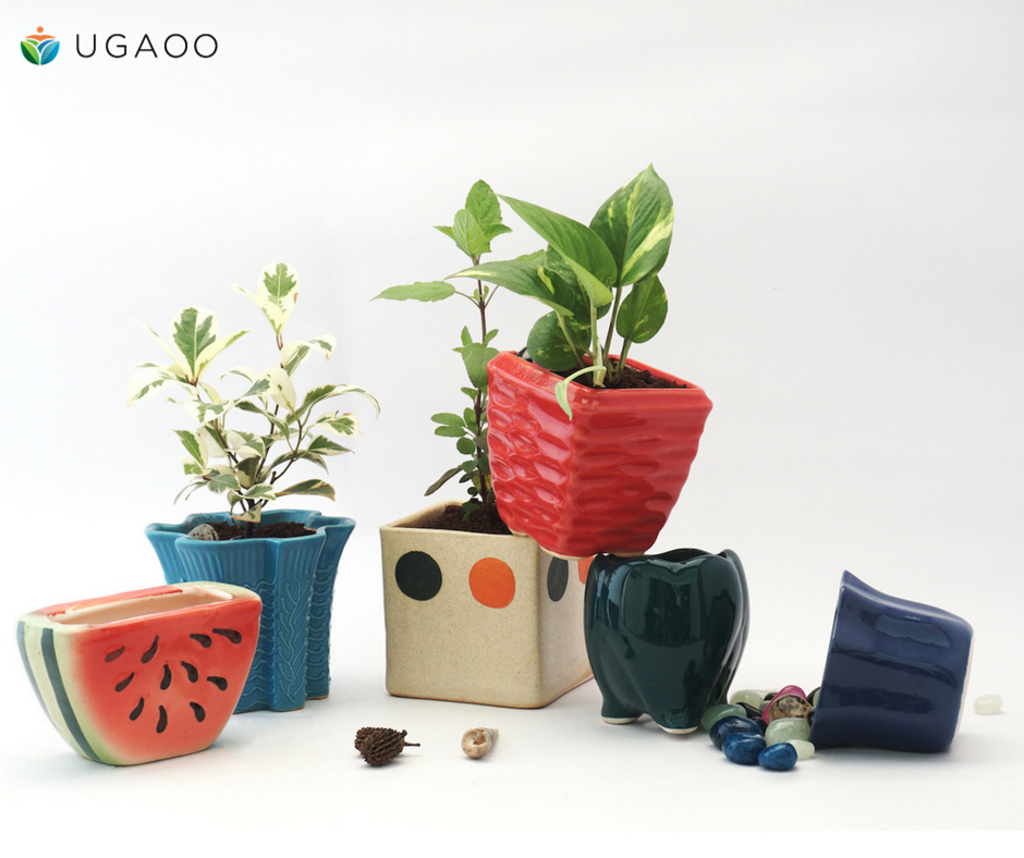 Be Quirky Be Stylish Our Pots And Planters Suit All Tastes And Aesthetics Ugaoopots Diy Gogreen Gardening India Ceramic Pots Colorful Planters Planters