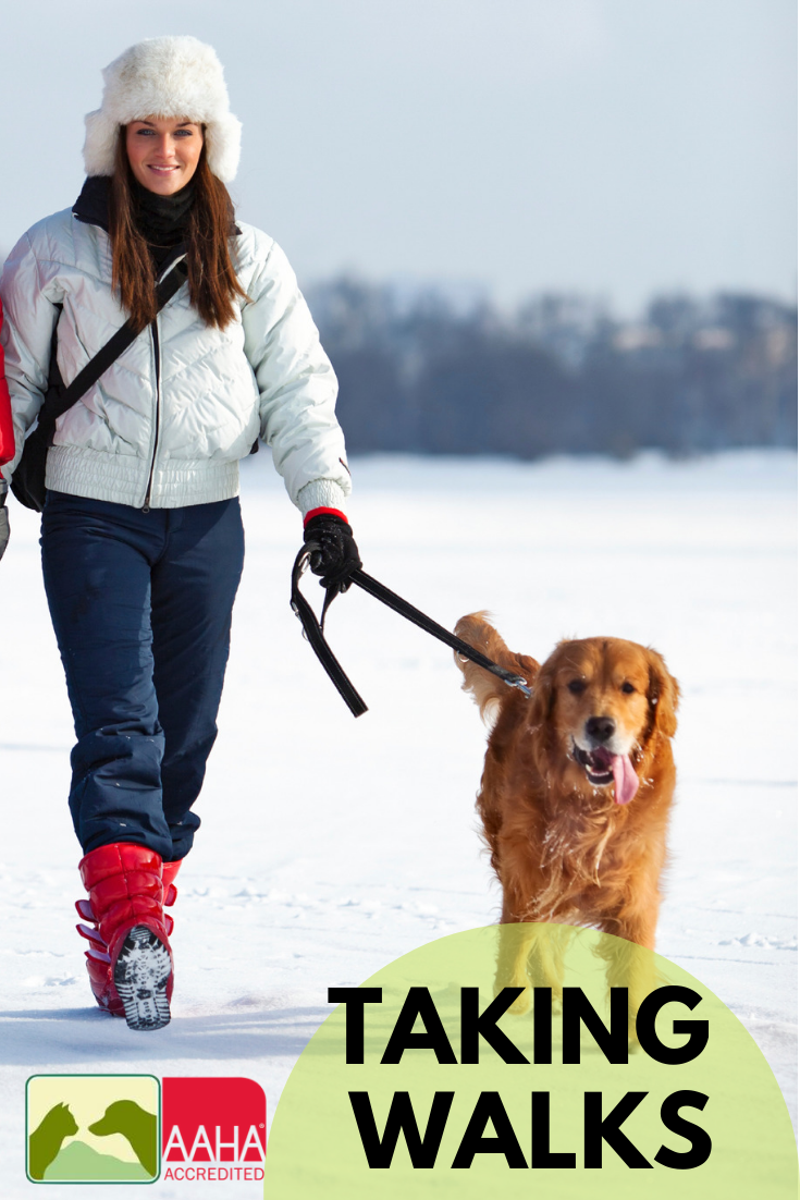Grab The Leash! It's National Walk Your Dog Month (With