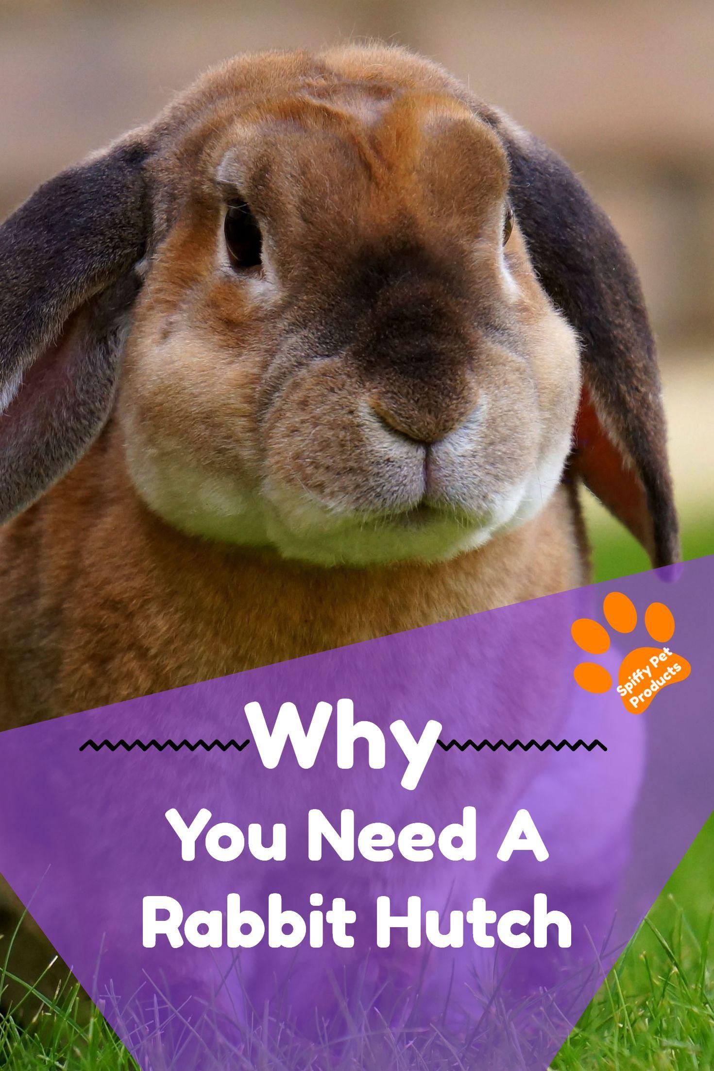 Large Indoor Rabbit Hutch Diy Rabbit Cage Ideas Accessories Top Blogs Pinterest Viral Board Rabbit Hutches Indoor Rabbit Rabbit