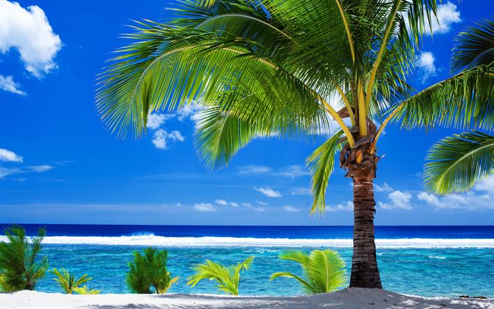 herunterladen hintergrundbild sommer tropischen insel strand palmen reise ozean k ste. Black Bedroom Furniture Sets. Home Design Ideas
