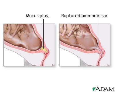 When Does Mucus Plug Form Ibovnathandedecker