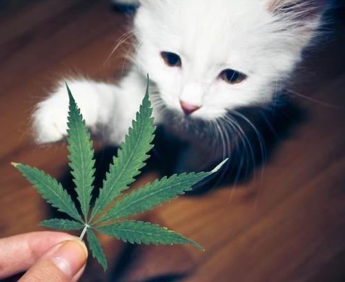 Ven gatito lindo