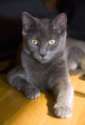 Best Cat Breeds For Busy Couples Best Cat Breeds Cat Breeds