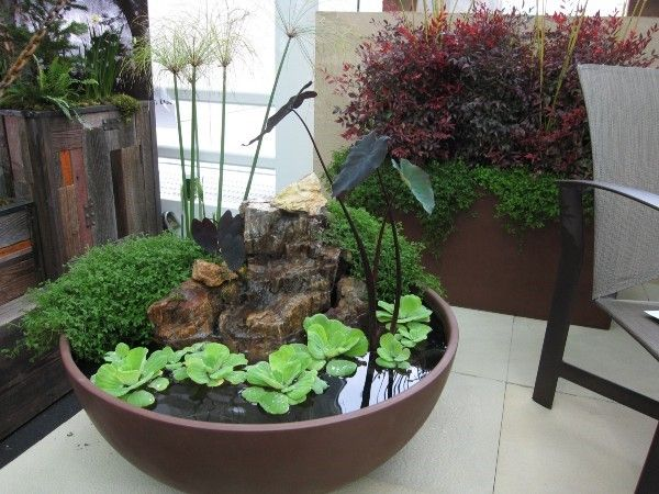 Creative Indoor Gardening Plants Rock Water Arrangement Low Container