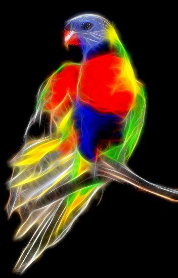 Rainbow Lorikeet Fractal Art Fractal Art Parrots Art Fractals