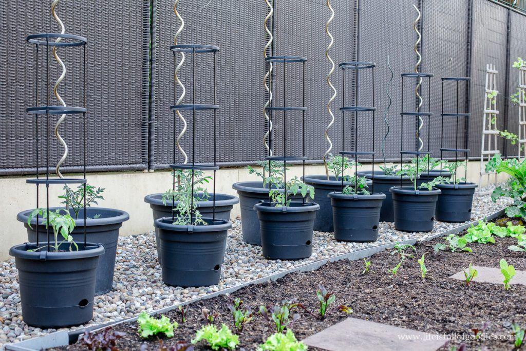 Tipps für den Tomatenanbau in Kübeln und meine neuen Tomatentöpfe #beetanlegen