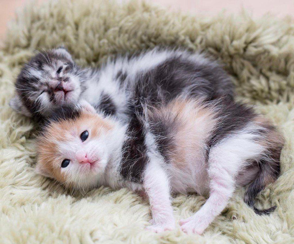 Kitten Lady Kittenxlady Twitter Cute Cats And Kittens Kitten Care Cat Care