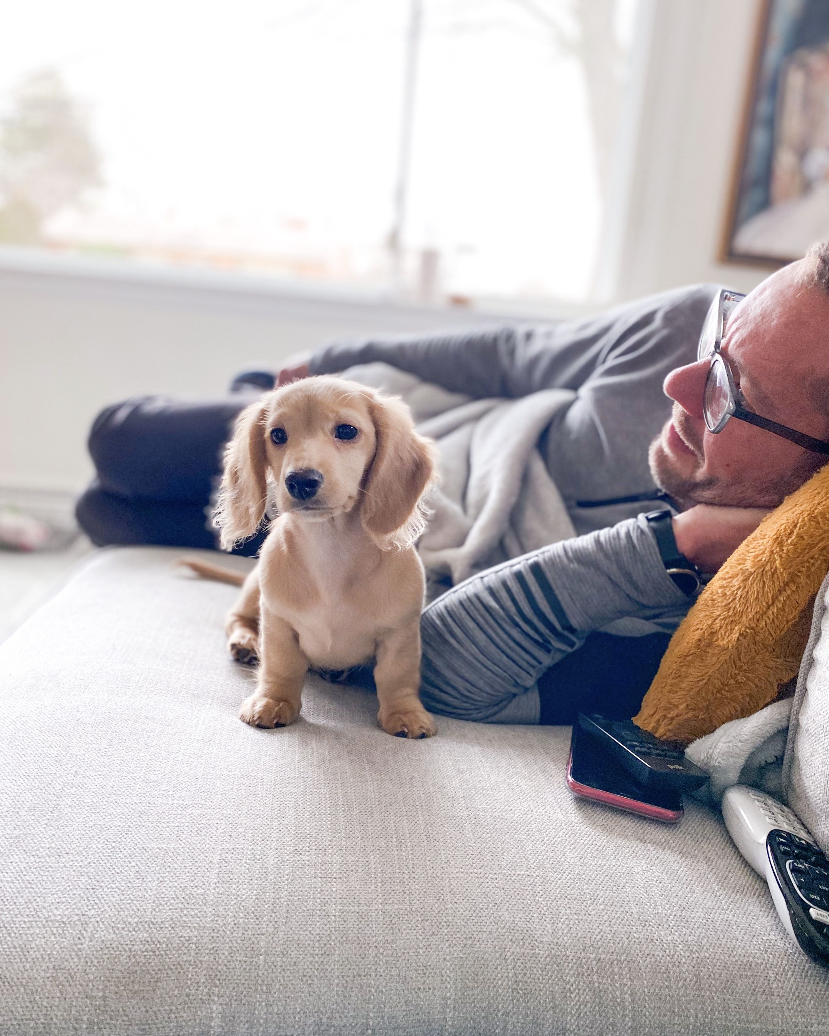 Sunday Afternoons In 2020 Dachshund Love Best Dogs Pet Parent