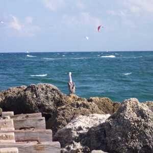 Pompano Beach Photos - Travel Pictures of Pompano Beach, Florida - IgoUgo