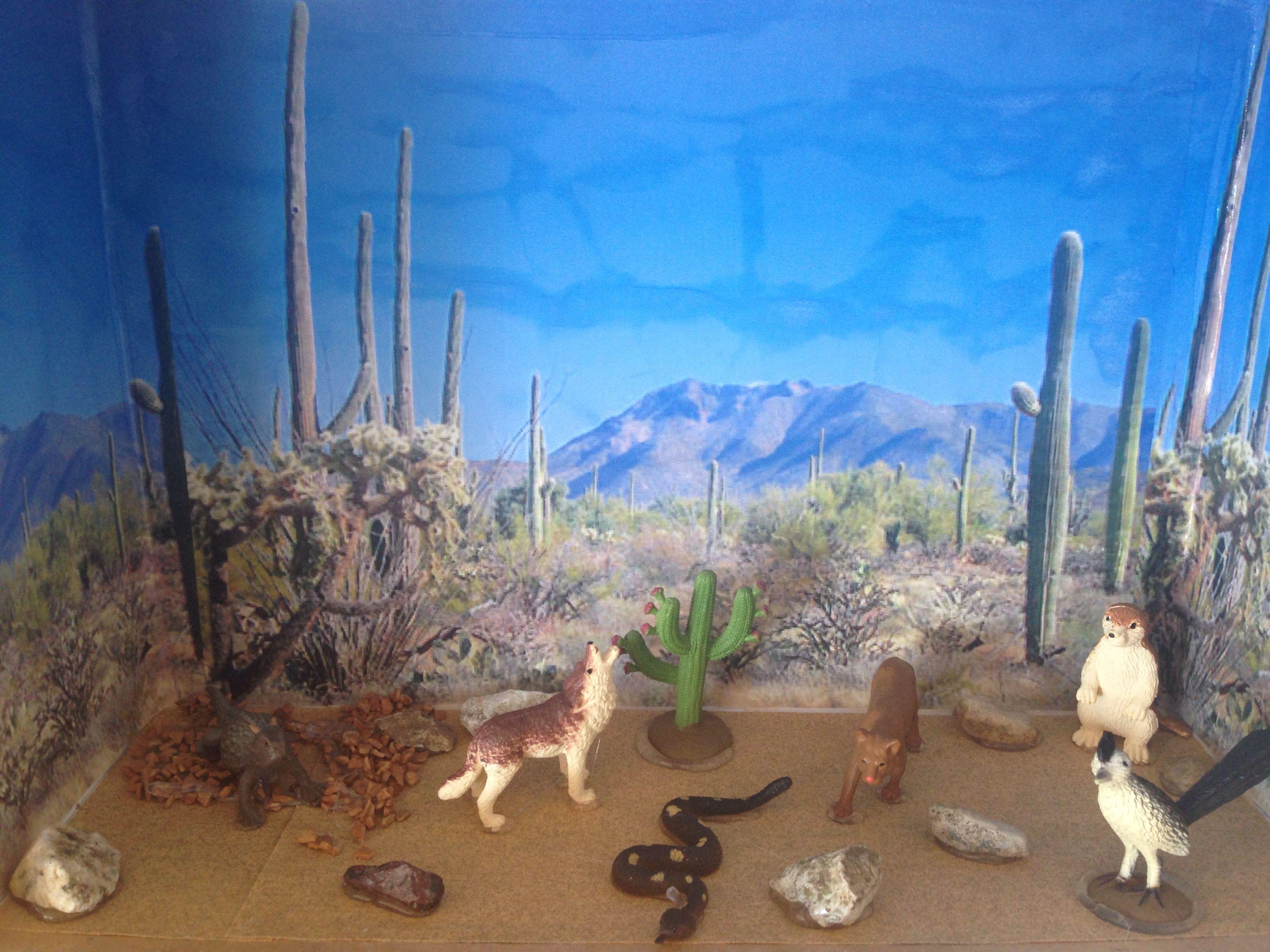 Third Grade Desert Ecosystem Diorama