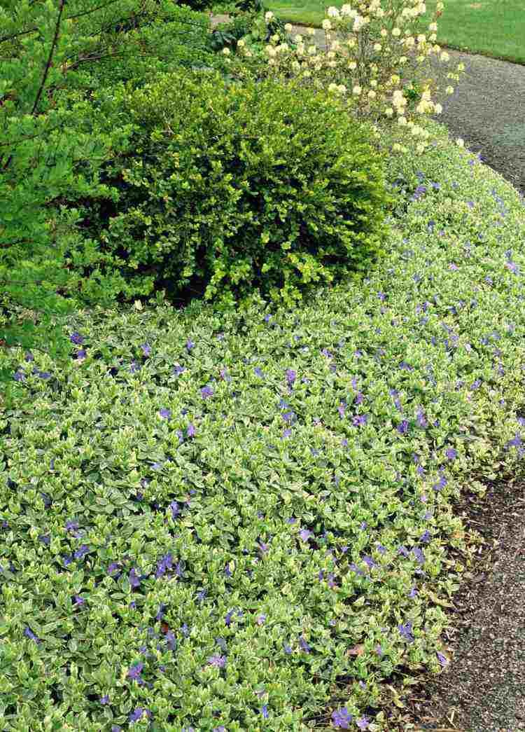 plantes couvre sol croissance rapide dans le jardin moderne pinterest plantes couvre sol. Black Bedroom Furniture Sets. Home Design Ideas