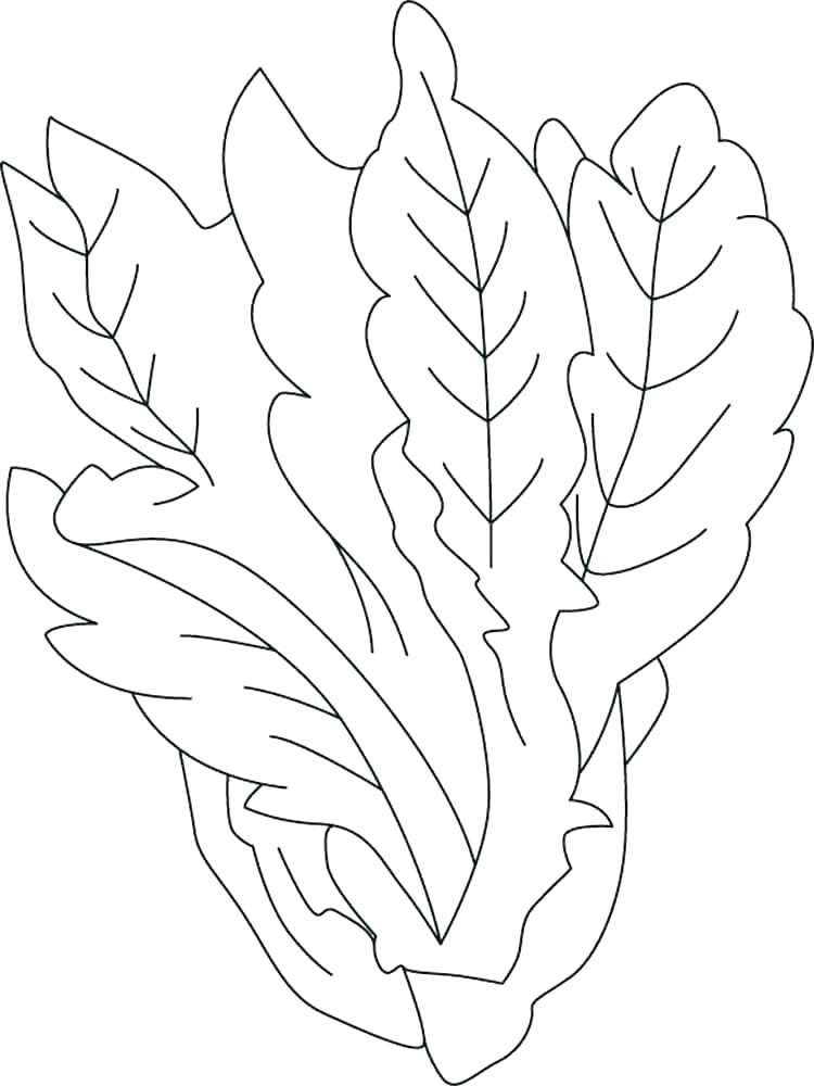 Lettuce Coloring Page Twisty Noodle Vegetable Coloring Pages