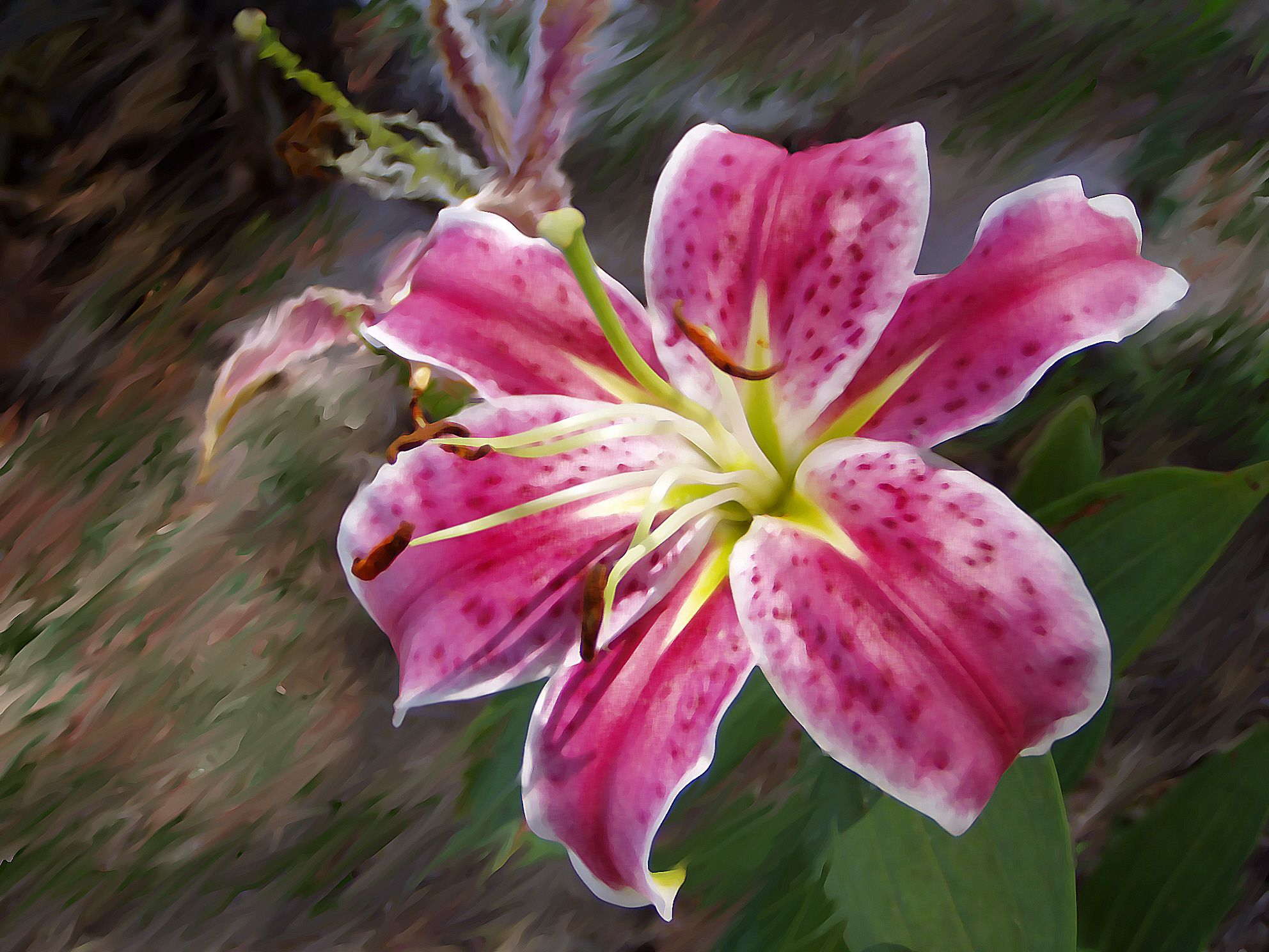 Pink lily Flower art, Pink lily, Flowers