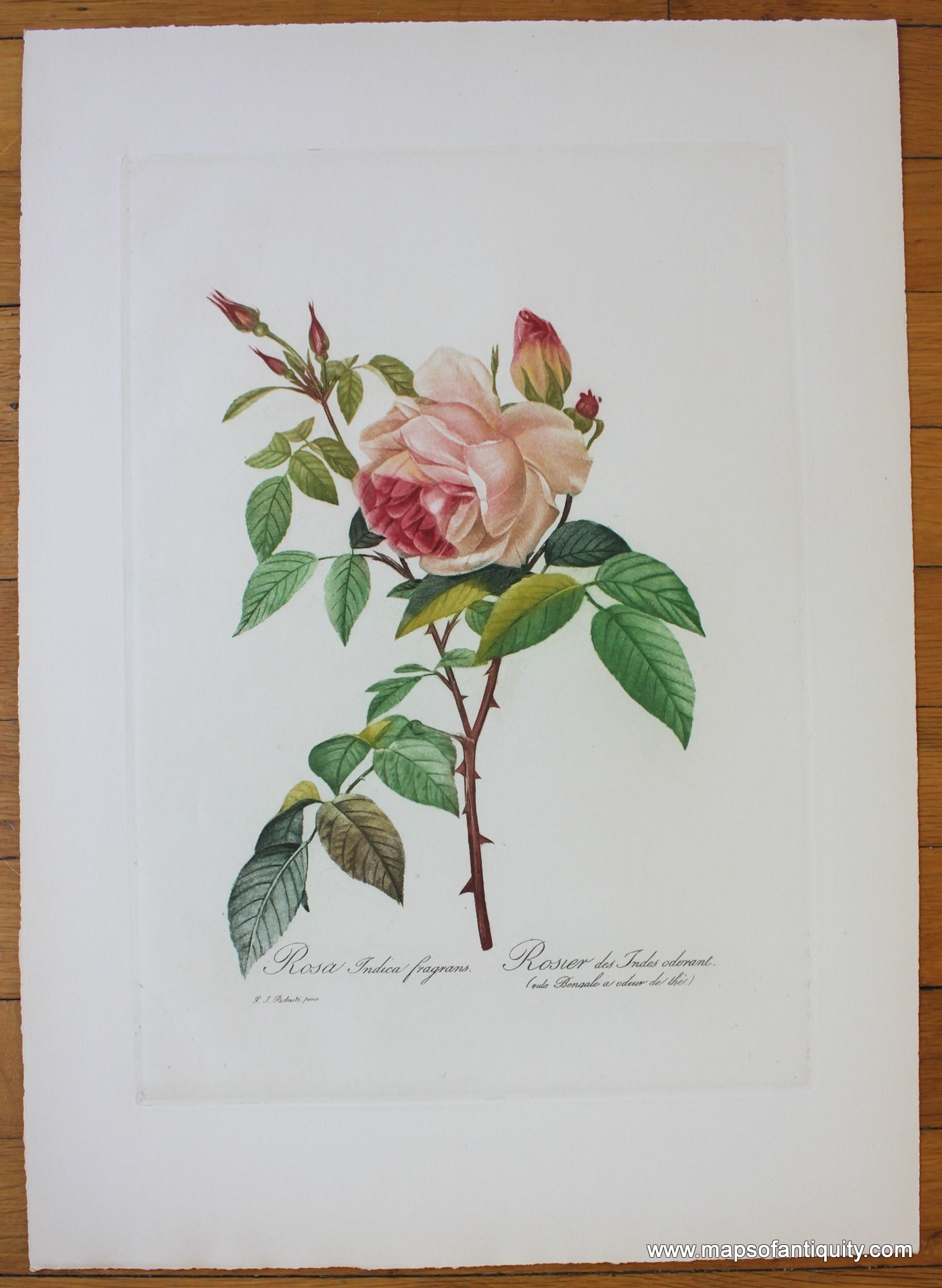 Rosa Indica Fragrans Rosier Des Indes Odorant Antique Maps And Charts Original Vintage Rare Historical Prints Reproductions Of