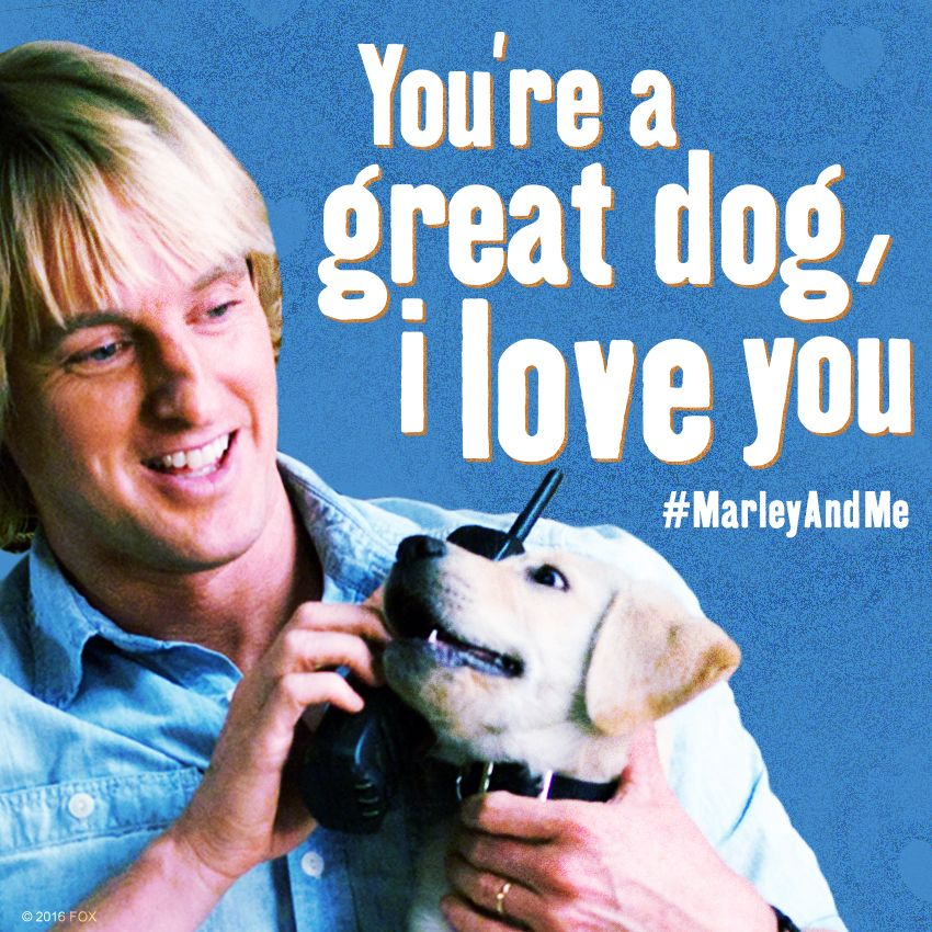 Marley & Me - Movie Quotes - Cute Dogs | Movie Quotes ...  Marley & Me - M...