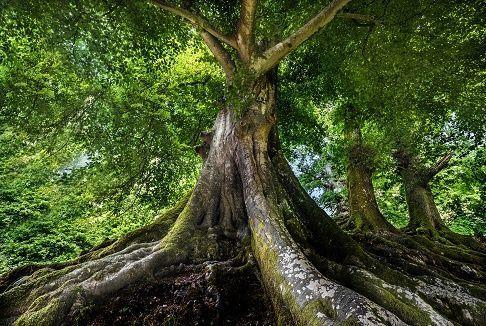 Árboles | Nombres de árboles. Están desglosados al final los árboles cuya madera es utilizada en carpintería o ebanistería. Para evitar duplicidades, remiten a los subapartados correspondientes los nombres de los árboles ornamentales,de los que vivenen el agua o en terrenos muy húmedos (plantas acuáticas), de los que tienen alguna parte comestible (tanto para los humanos como para los animales), de los que poseen propiedades medicinales, y de las palmas, pues se hallan en los subapartados…