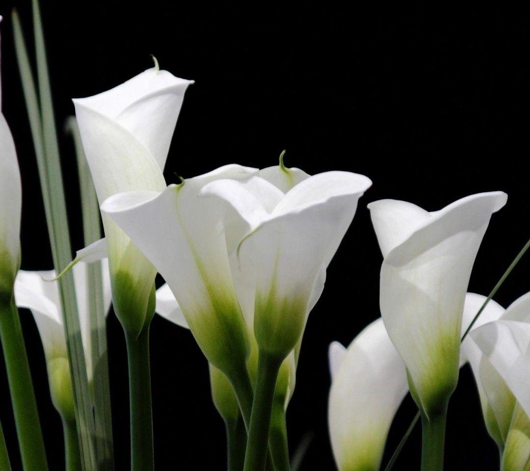 1080x960 Flor Fondos De Pantalla Descargar