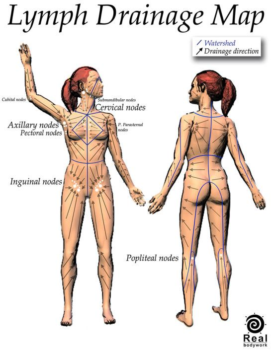 Lymph Drainage Map Lymphatic System Lymphatic Massage And Lymph Nodes