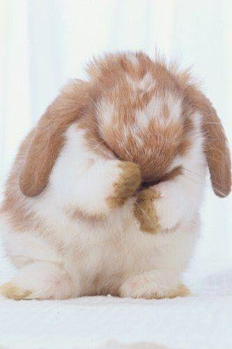 Bunny Covering Eyes Kaninunger Dyr Nuttede Dyr