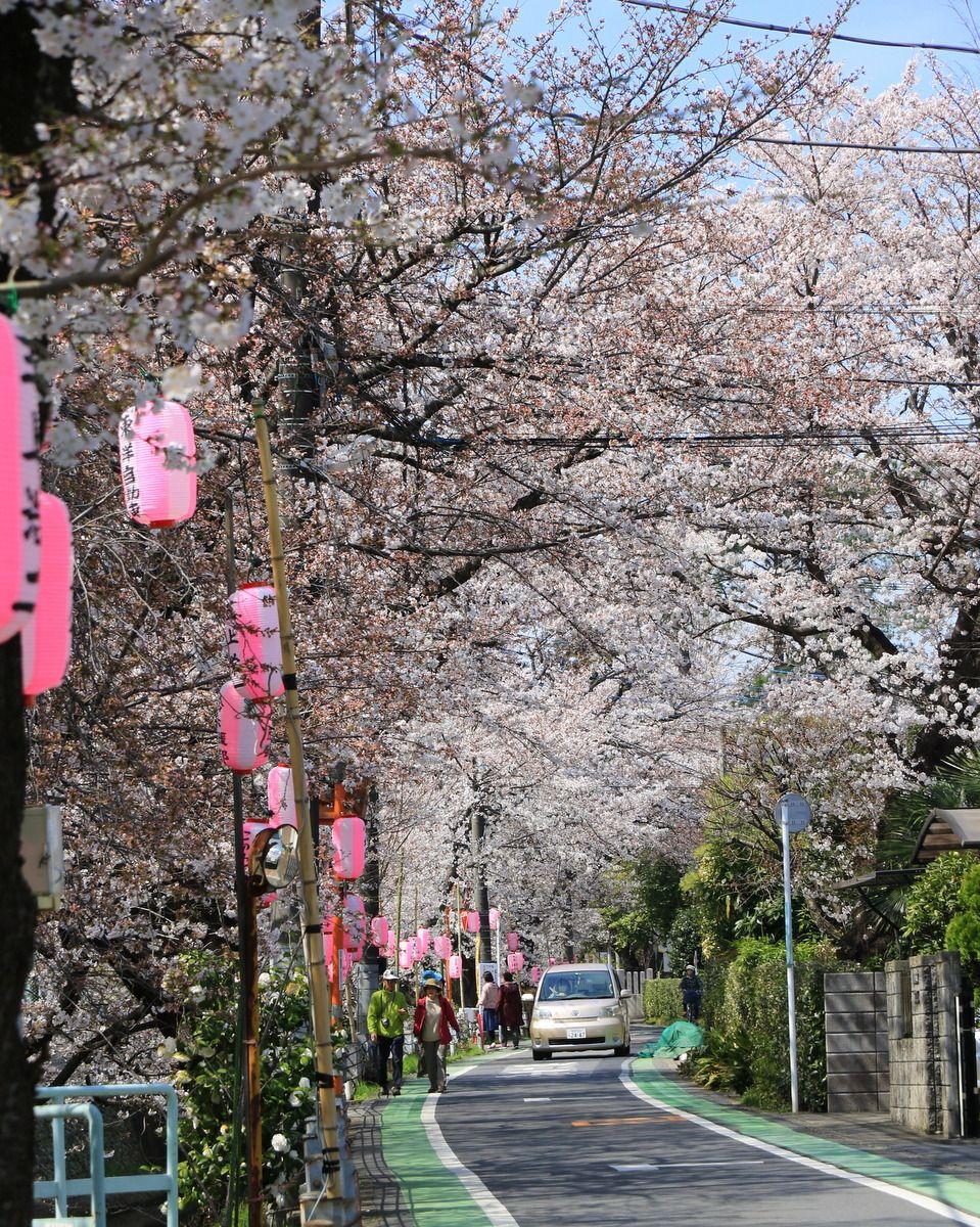 Spring In Tokorozawa Saitama Tokyo Saitama Japan