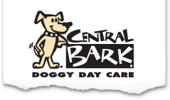 Doggy Day Care Dog Day Care Dog Boarding Dog Kennel Dog Grooming Dog Training Pet Franchises Pension