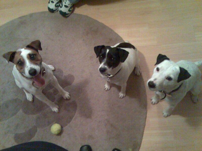 ...three jacks!!