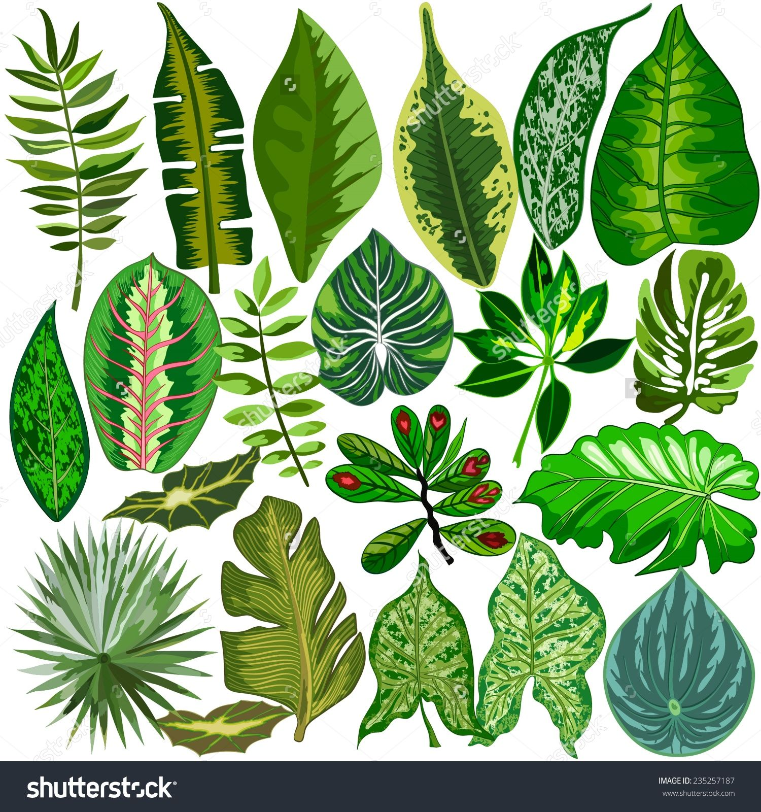 set of tropical leaves stock vector illustration 235257187