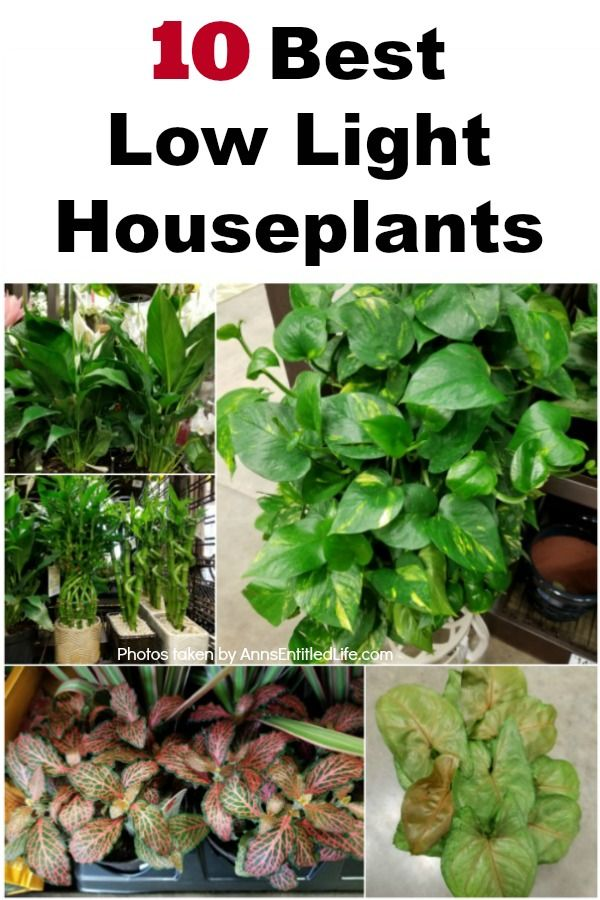 10 Best Low Light Houseplants If You Have A Darker Room 400 x 300