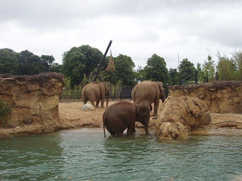 Dublin Zoo Kaziranga Forest Trail Dublin Zoo Zoo Animals Conservation