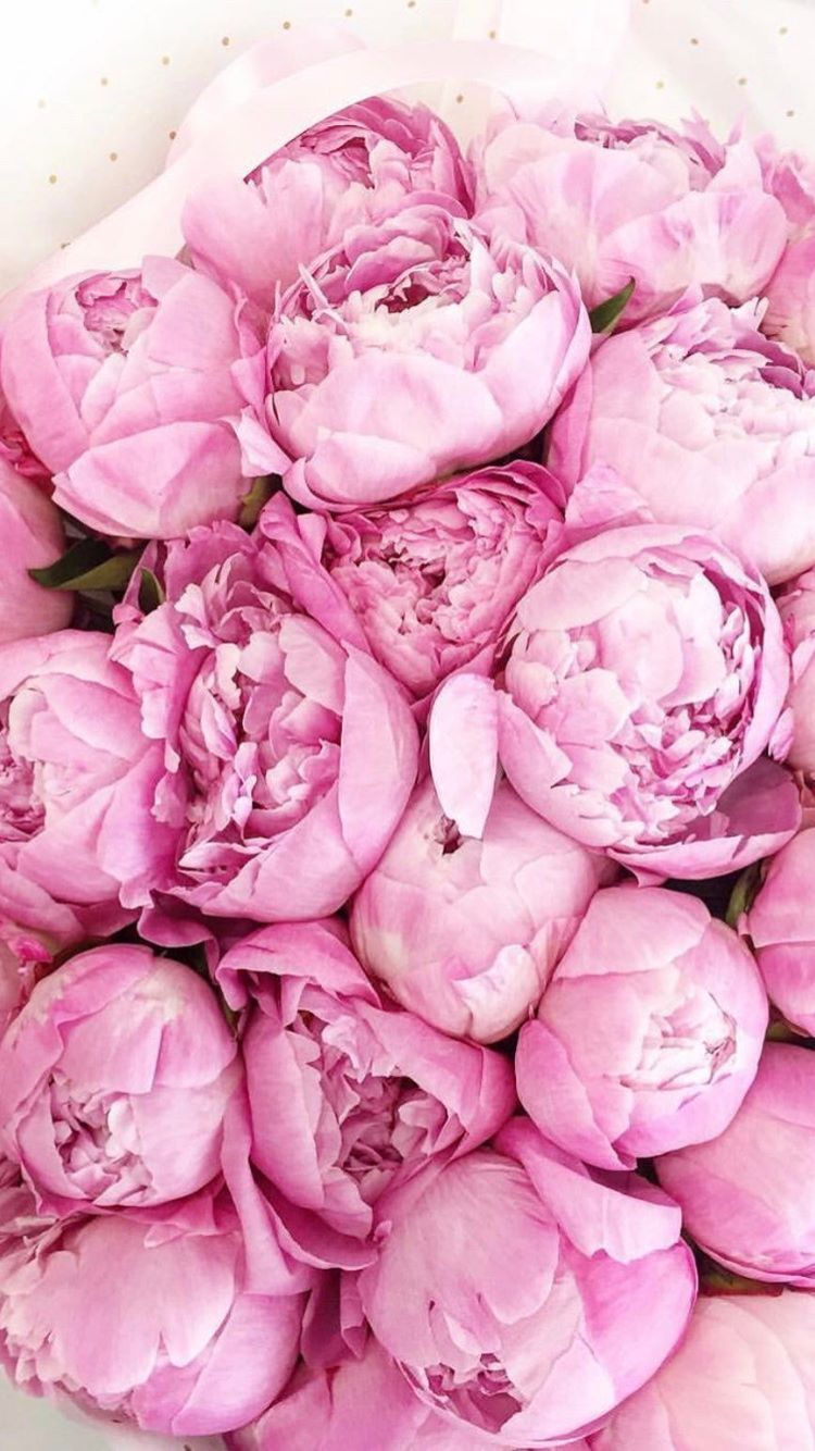 Pretty Pink Peonies Pink Peonies Wallpaper Pink Peonies Bouquet Garden Rose Bouquet Pink