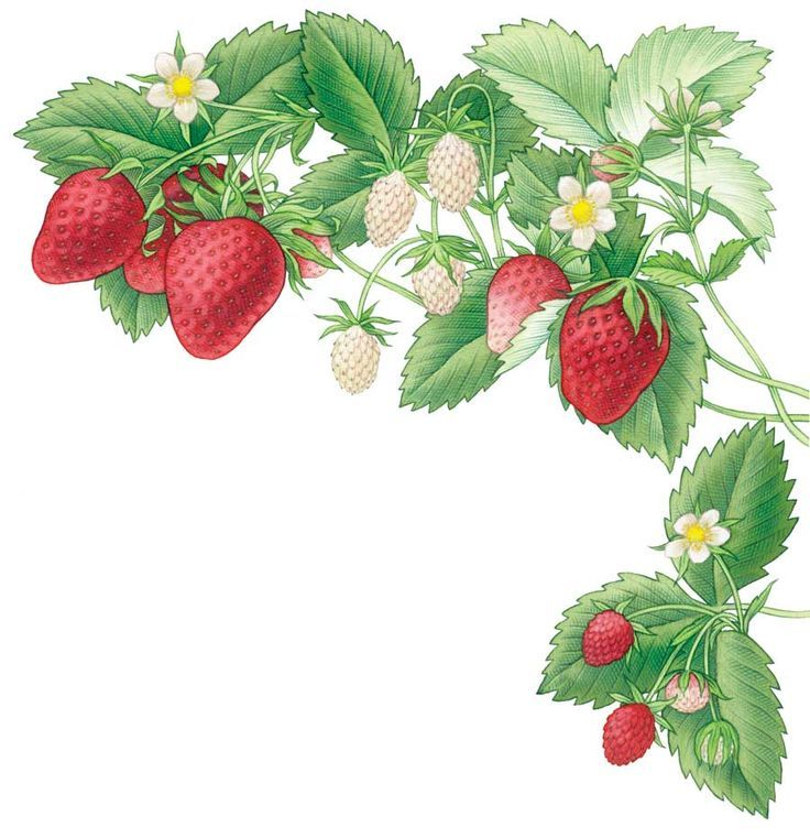Growing Strawberries In A Planter: All About Growing Strawberries