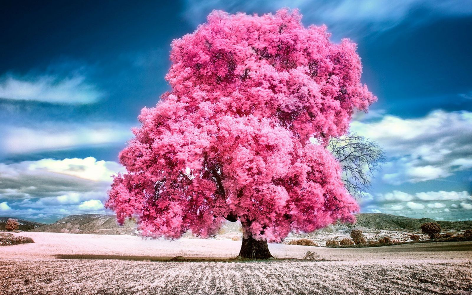 Sky Clouds Pink Summer Beauty Beautiful Tree Nature Landscape Wallpaper Beautiful Nature Flowering Trees Pink Nature