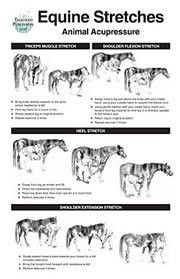 Equine Stretch Poster - Clinical Charts and Supplies