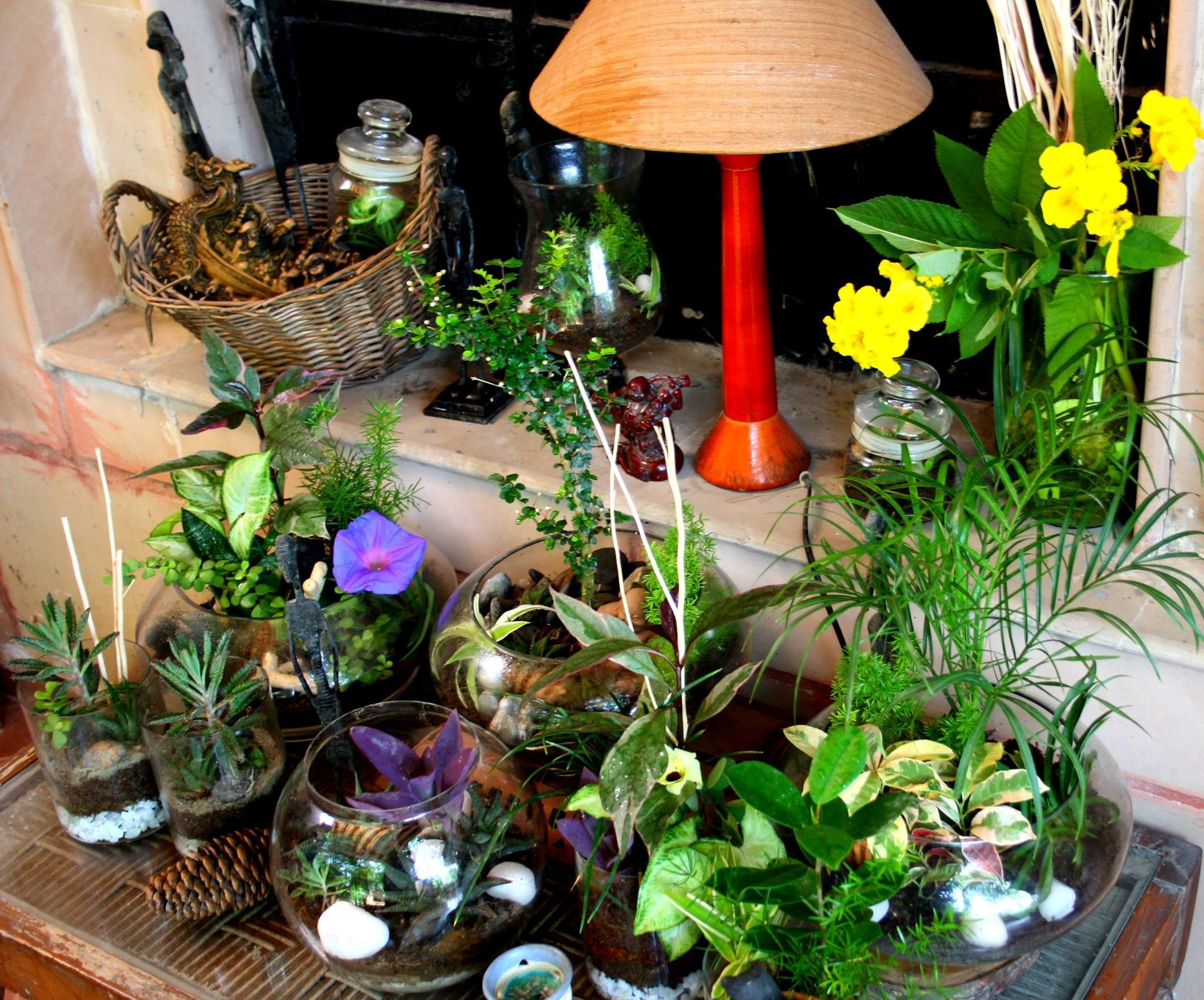 Doors Indoor Plant Display Ideas Indoor Plant Decoration