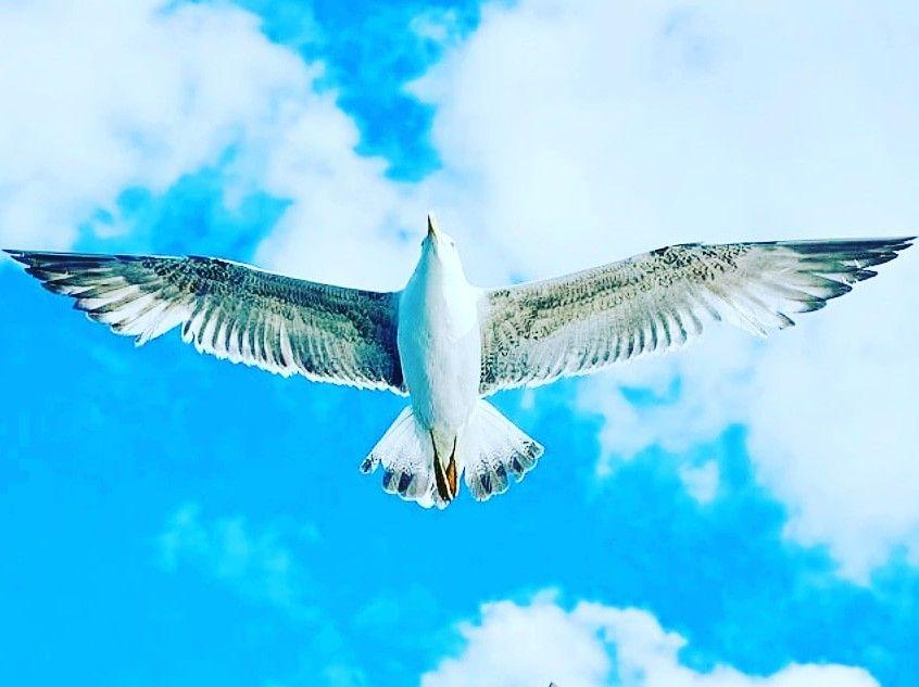 www.packagetourturkey.com #fly #sky #bestoftheday